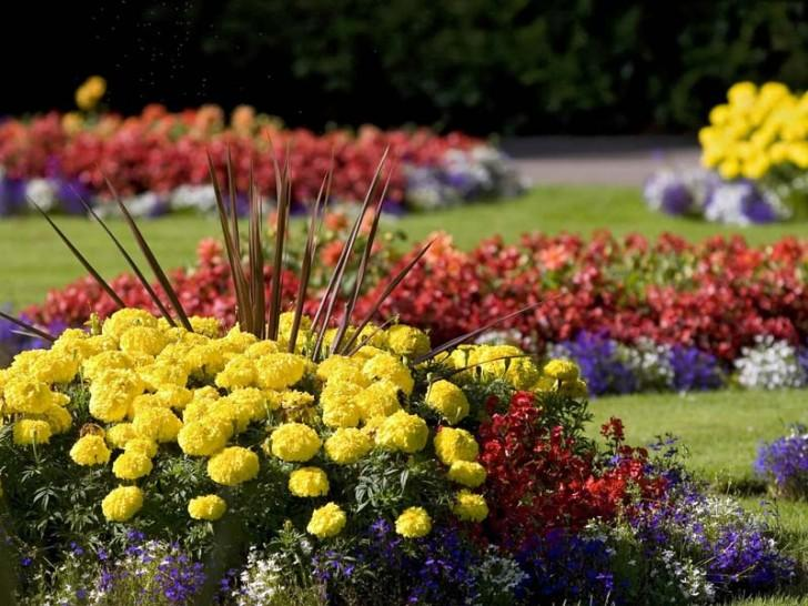 colorful-gardening-ideas-for-summer-728x546
